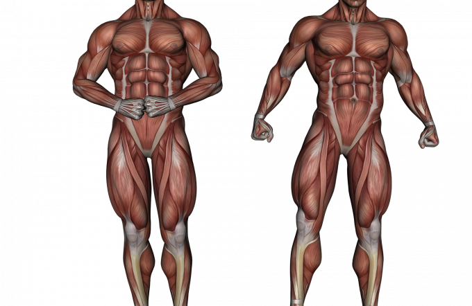 Importance of Anatomical 3D Models in Medical Field